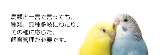 鳥類の病気