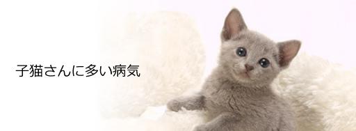 子猫さんに多い病気