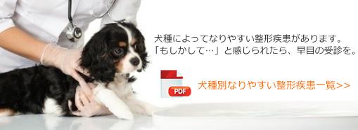 犬種別なりやすい整形疾患一覧